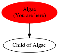 Graph of models related to 'Algae'